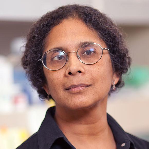 Anjana Jain Dissertation
