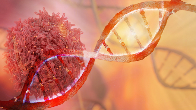 Mislocated or aberrant DNA is a danger signal. Image courtesy of La Jolla Institute for Immunology.