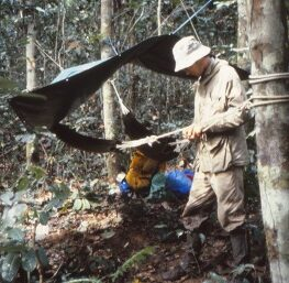 Richard Barnes setting up camp in the jungle. Tarp and rope tied to a tree