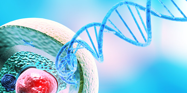 """TET enzymes control gene expression by triggering a process called demethylation, where a molecule called a methyl group is removed from where it sits in the genetic code. Demethylation is important because it alters how a cell """"reads"""" DNA. Image: Courtesy of La Jolla Institute for Immunology."""